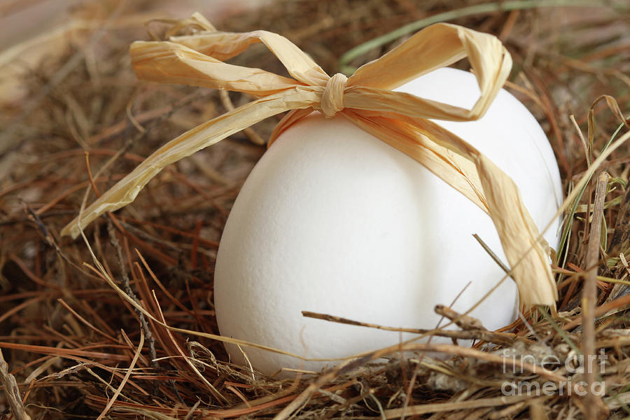 White Egg With Bow On Straw  Photograph  - White Egg With Bow On Straw  Fine Art Print