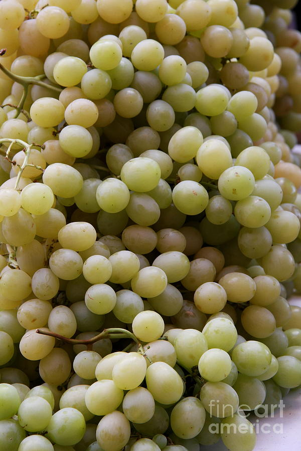 White Grapes Photograph  - White Grapes Fine Art Print
