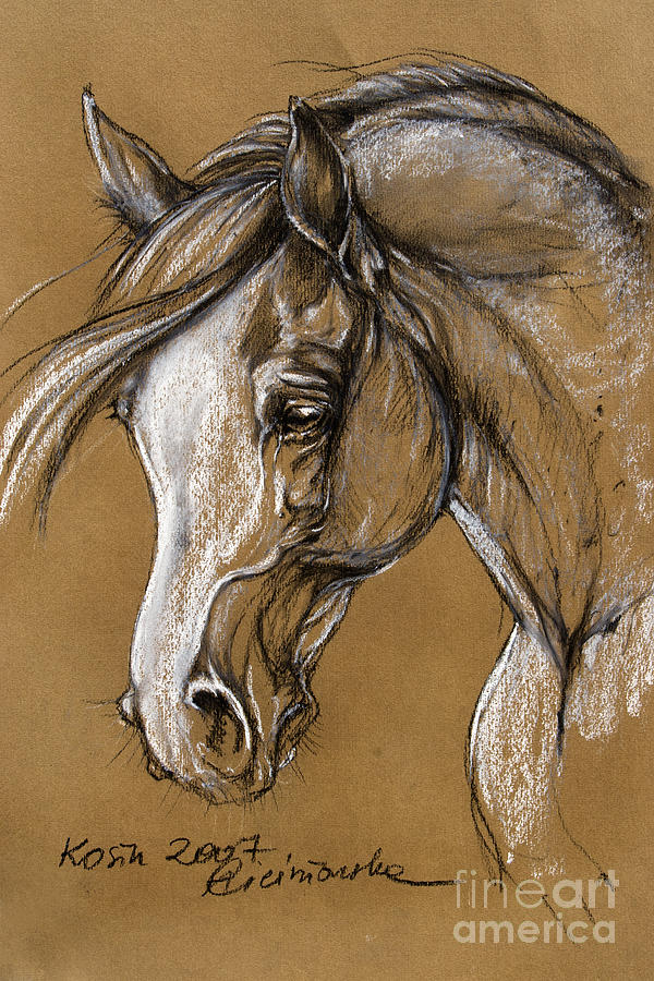 Horse Pastel - White Horse Soft Pastel Sketch by Angel  Tarantella
