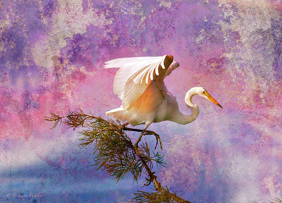 J Larry Walker Digital Art - White Lake Swamp Egret by J Larry Walker