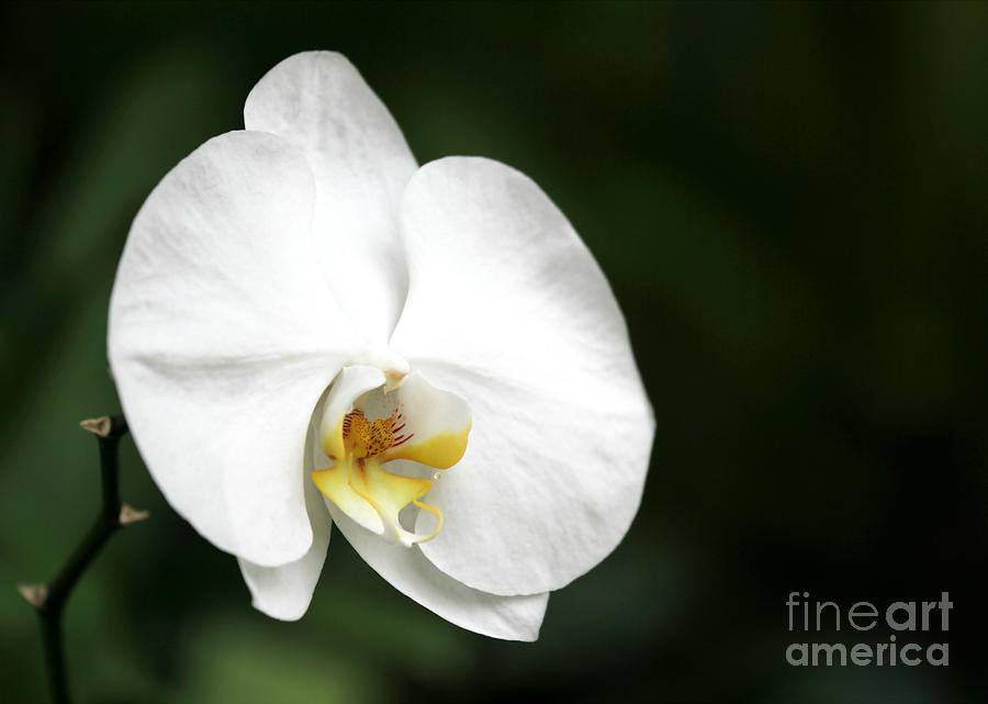 White Light Photograph  - White Light Fine Art Print
