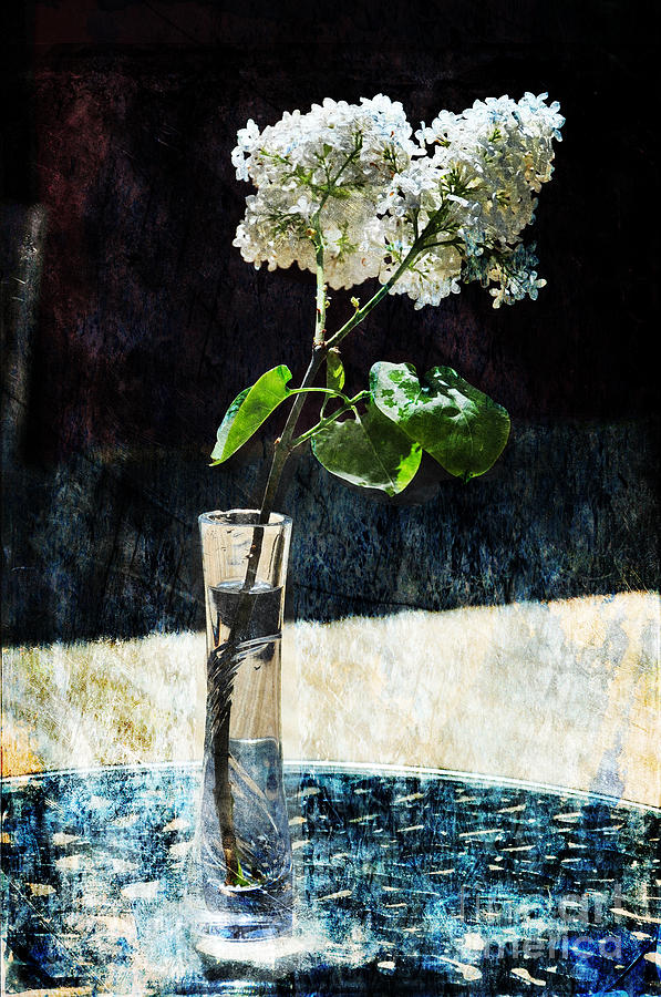 White Lilacs Photograph