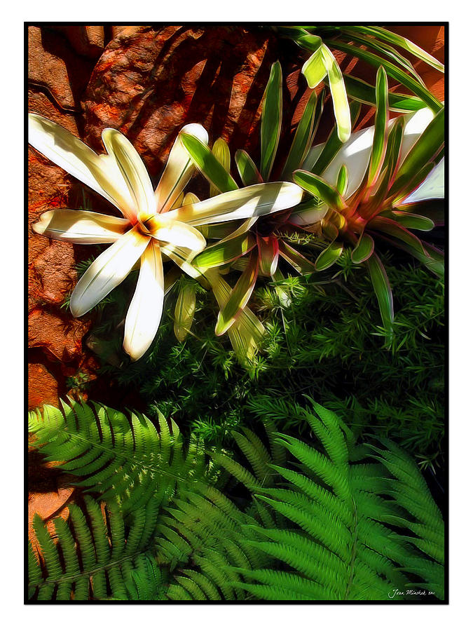 White Maui Flowers Digital Art