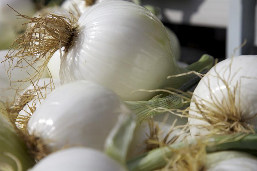 White Onions Photograph  - White Onions Fine Art Print