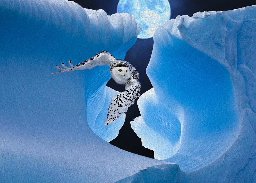 White Owl Photograph
