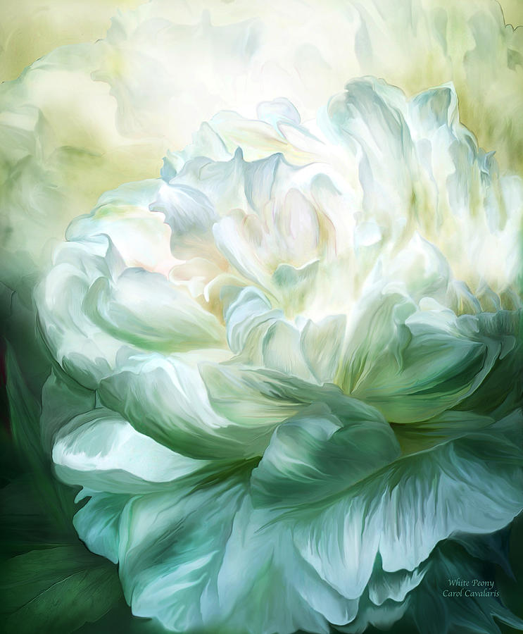 White Peony Mixed Media by Carol Cavalaris