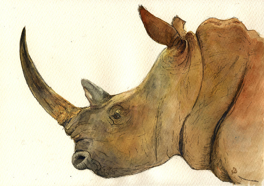 White Rhino Head Study Painting  - White Rhino Head Study Fine Art Print