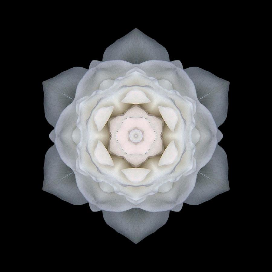 White Rose I Flower Mandala Photograph