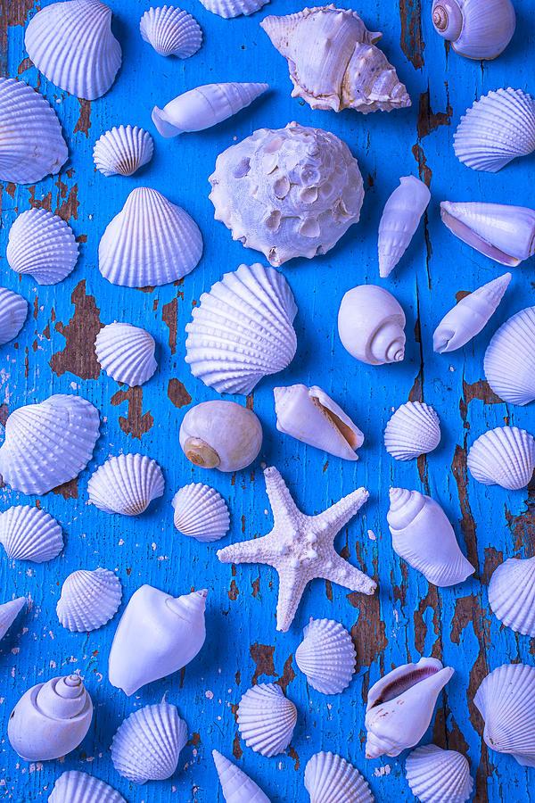 White Sea Shells On Blue Board Photograph