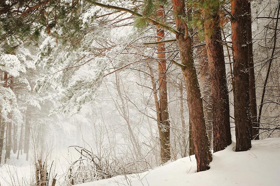 Snow Photograph - White Silence by Jenny Rainbow