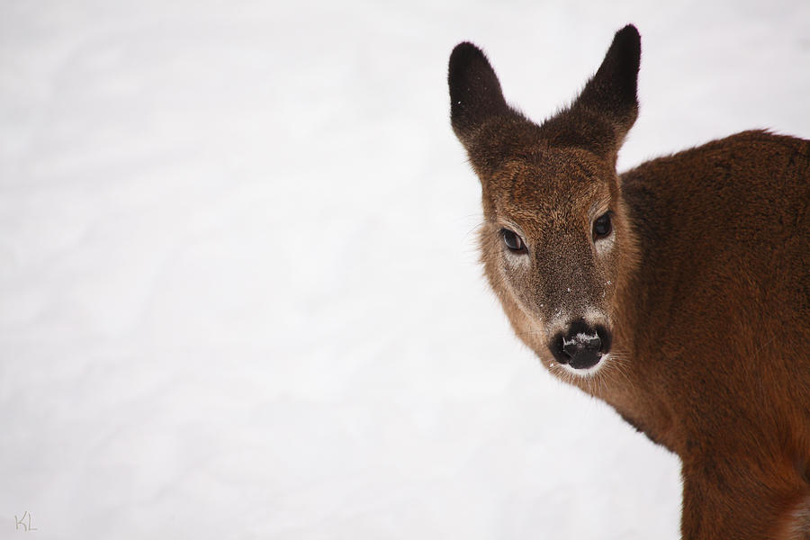 White Tail Babe Photograph