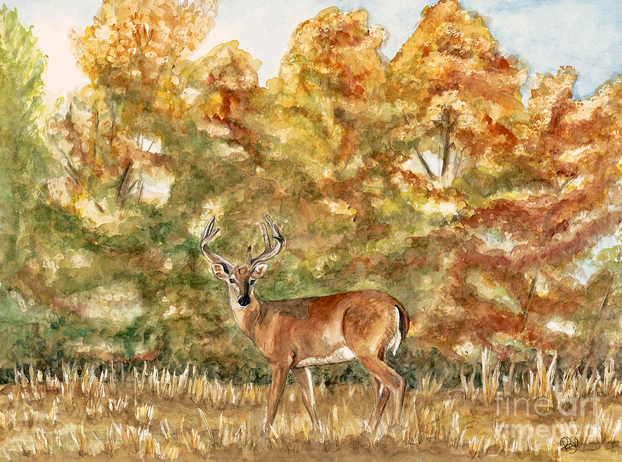 White Tail Buck In The Ozarks  Painting