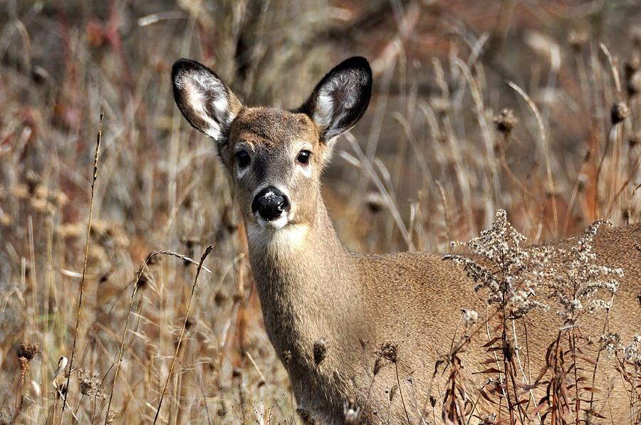 White Tailed Deer Favorite Food