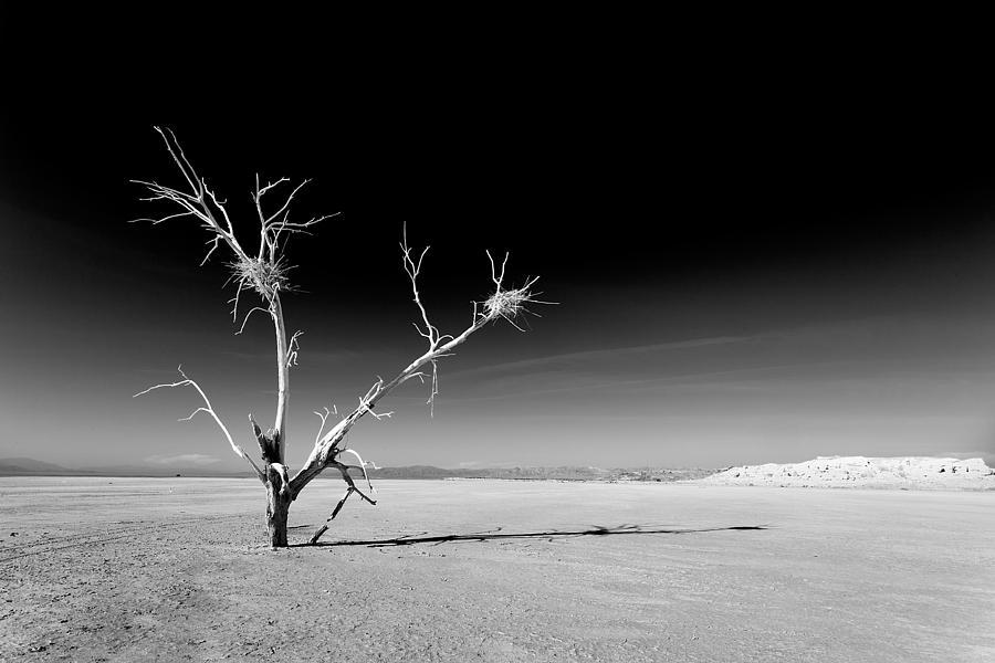 White Tree Photograph