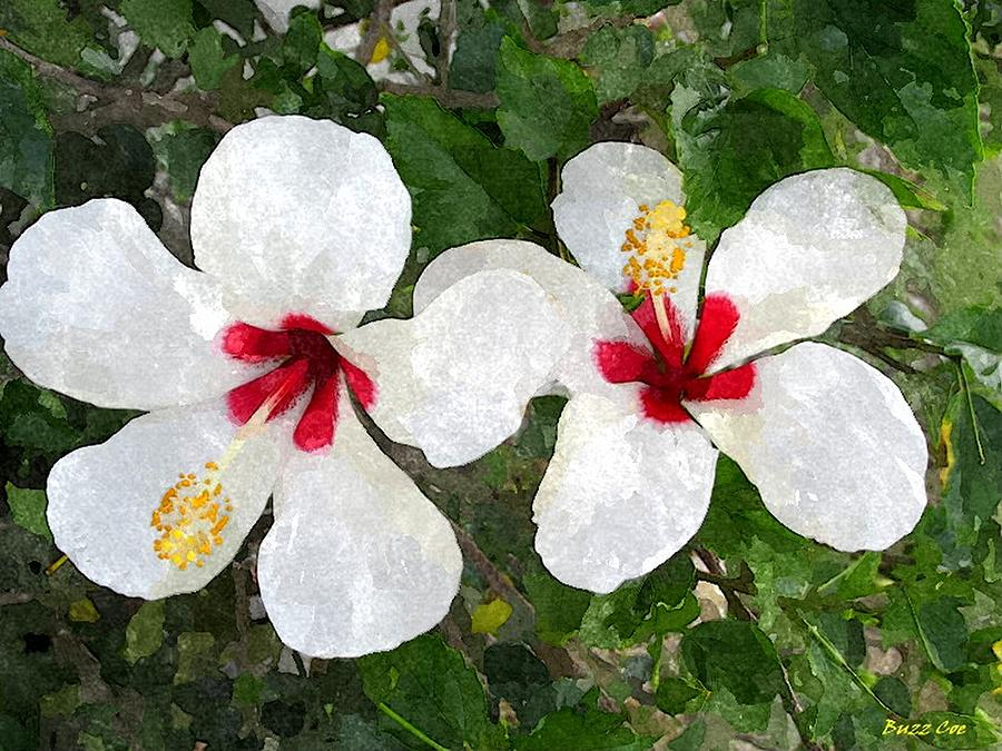 White Twin Hibiscus With Red Veriegation Photograph