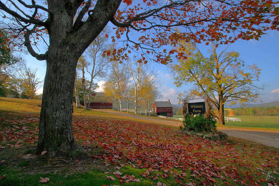 Whitney Farm Photograph