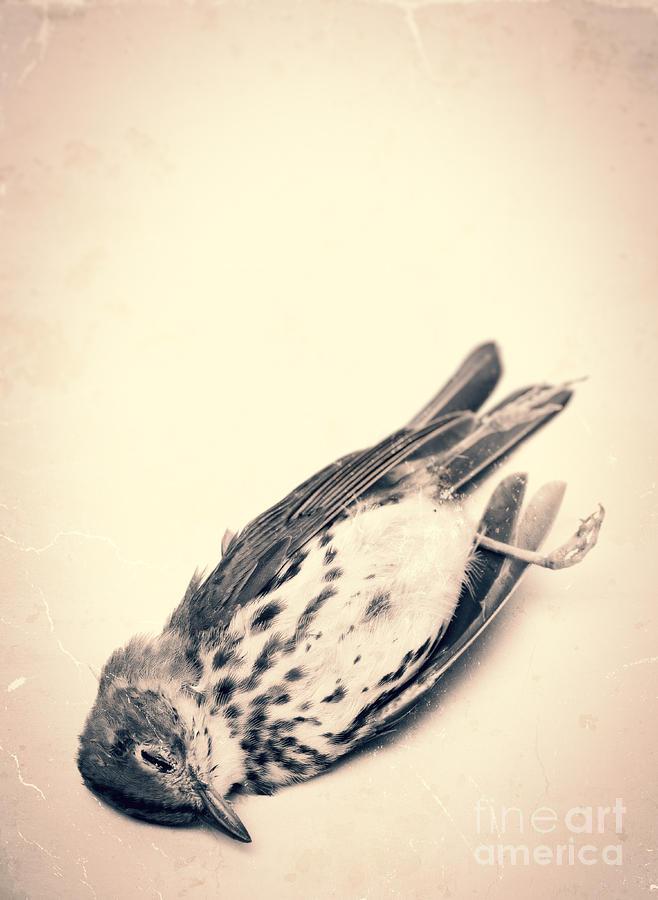 Who Killed Cock Robin Photograph