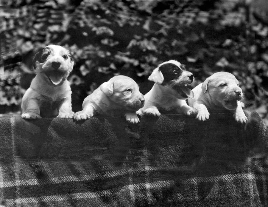1933 Photograph - why I Love A Dog Prizes by Underwood Archives