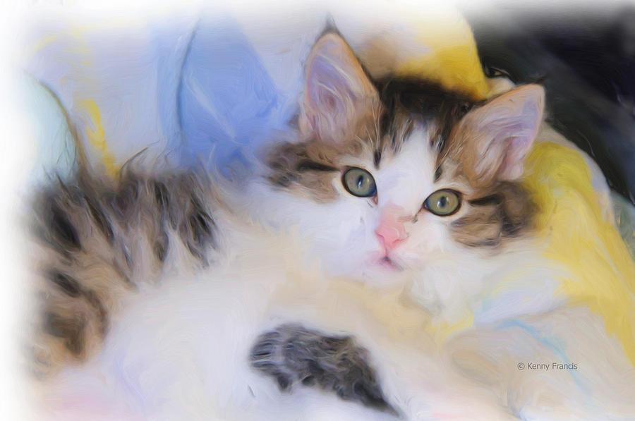 Wide Eyed Kitten Photograph