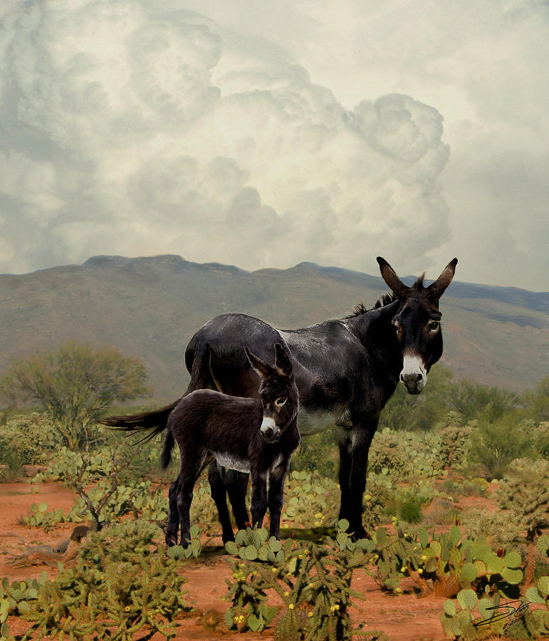 Burro Painting - Wild Burros Of Tucson by Schwartz