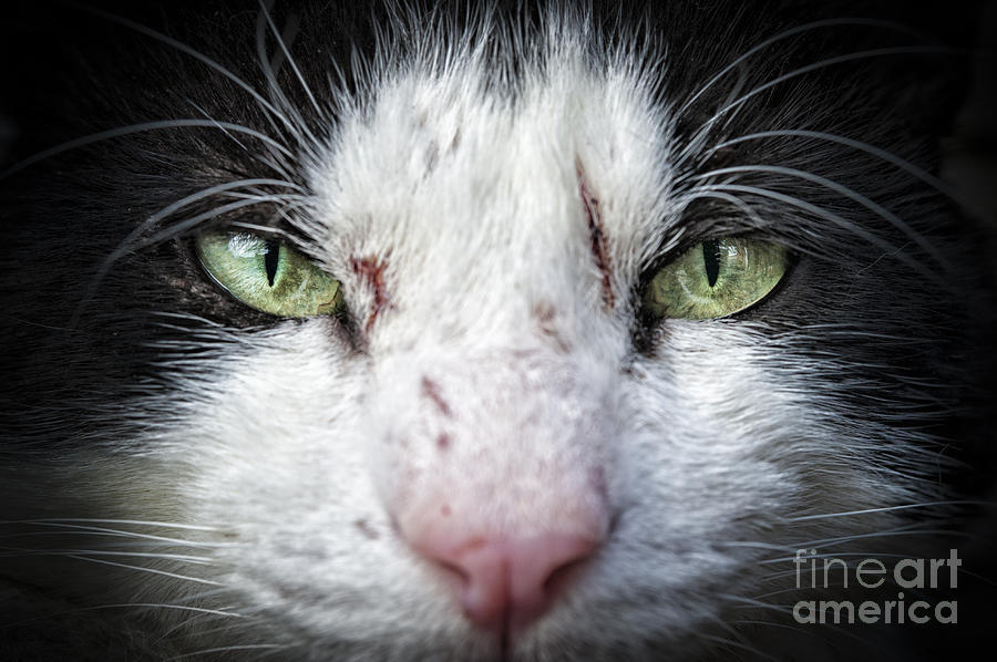 Wild Cat Photograph  - Wild Cat Fine Art Print