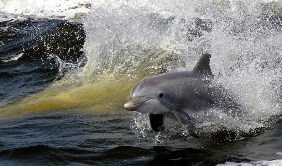 images of dolphins playing - photo #35