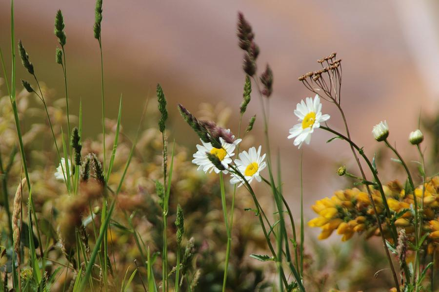 Landscape Photograph - Wild Flowers by Theresa Selley