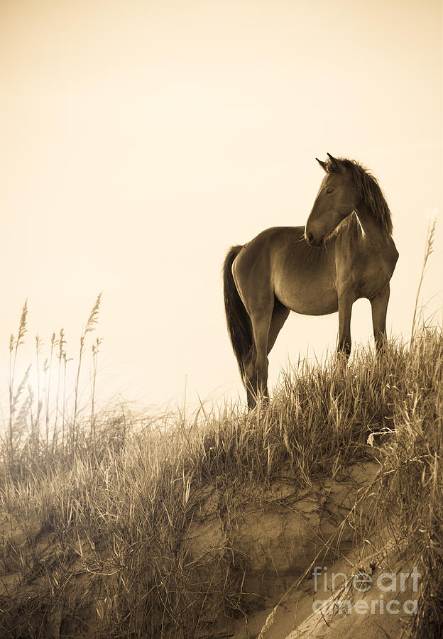 Wild Horse On The Beach Photograph