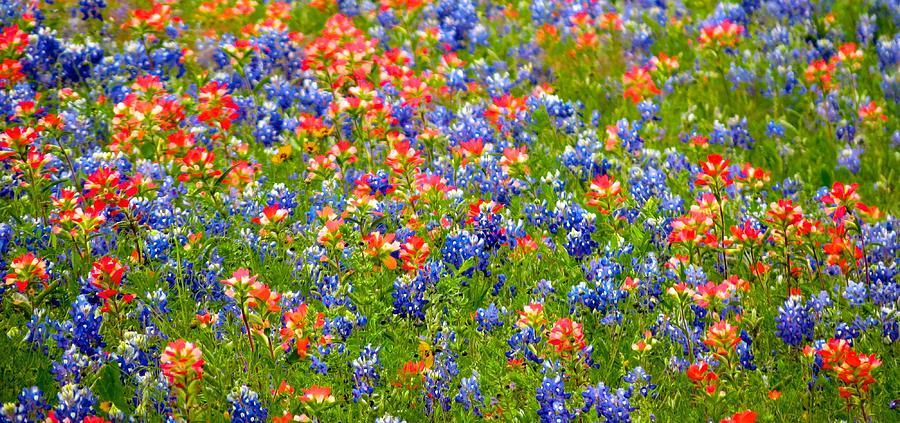 Wild In Texas Photograph