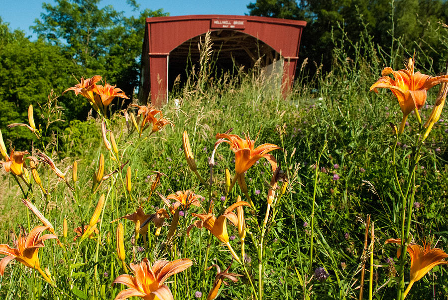 Wild Lillies And Holliwell Covered Bridge Madison County Iowa Photograph  - Wild Lillies And Holliwell Covered Bridge Madison County Iowa Fine Art Print