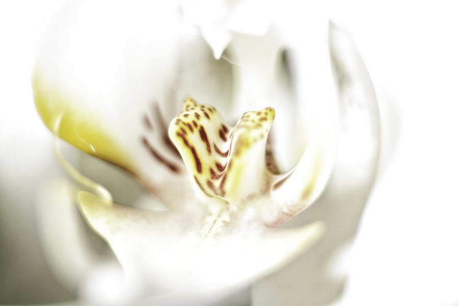 Art Photograph - Wild Orchid by Erik Brede