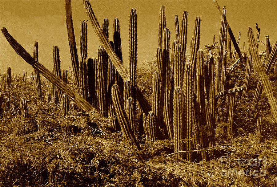 Sepia Photograph - Wild West Ivb by Anita Lewis