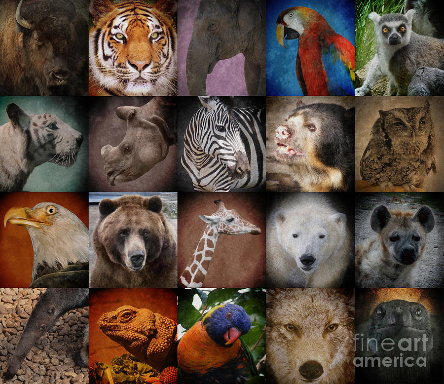 Wild Zoo Animal Squares Photograph  - Wild Zoo Animal Squares Fine Art Print
