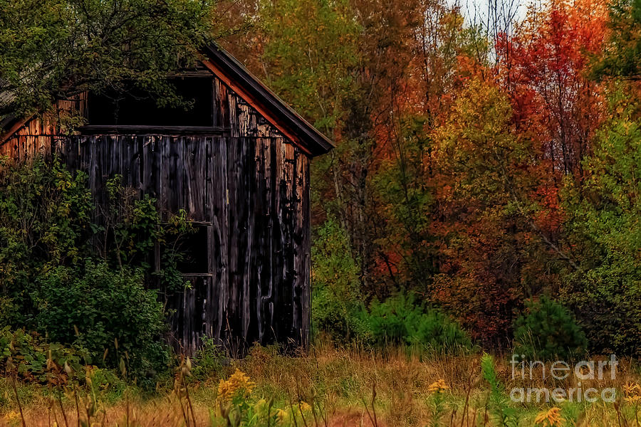 Barns Photograph - Wilderness Barn by Brenda Giasson