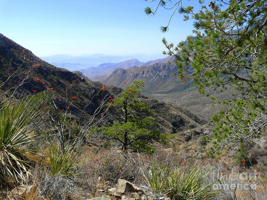 Wilderness Walk Photograph