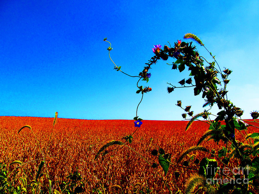 Wildflower And Soy Photograph  - Wildflower And Soy Fine Art Print