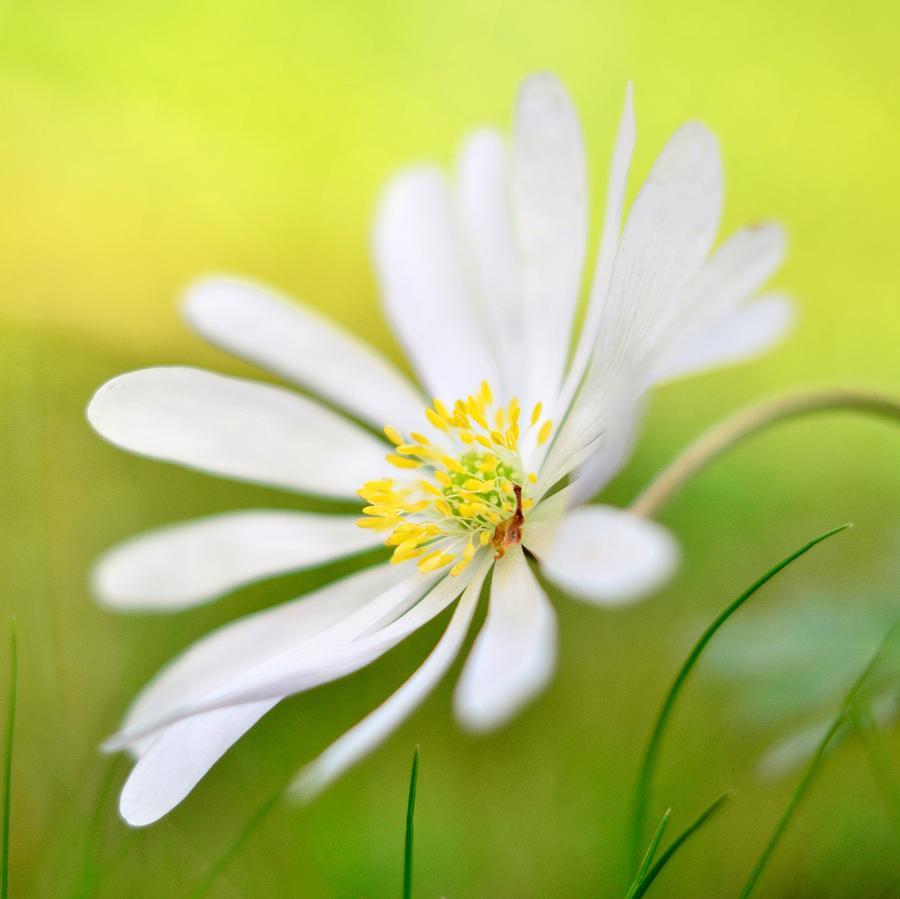 Wildflower Photograph - Wildflower by Gynt