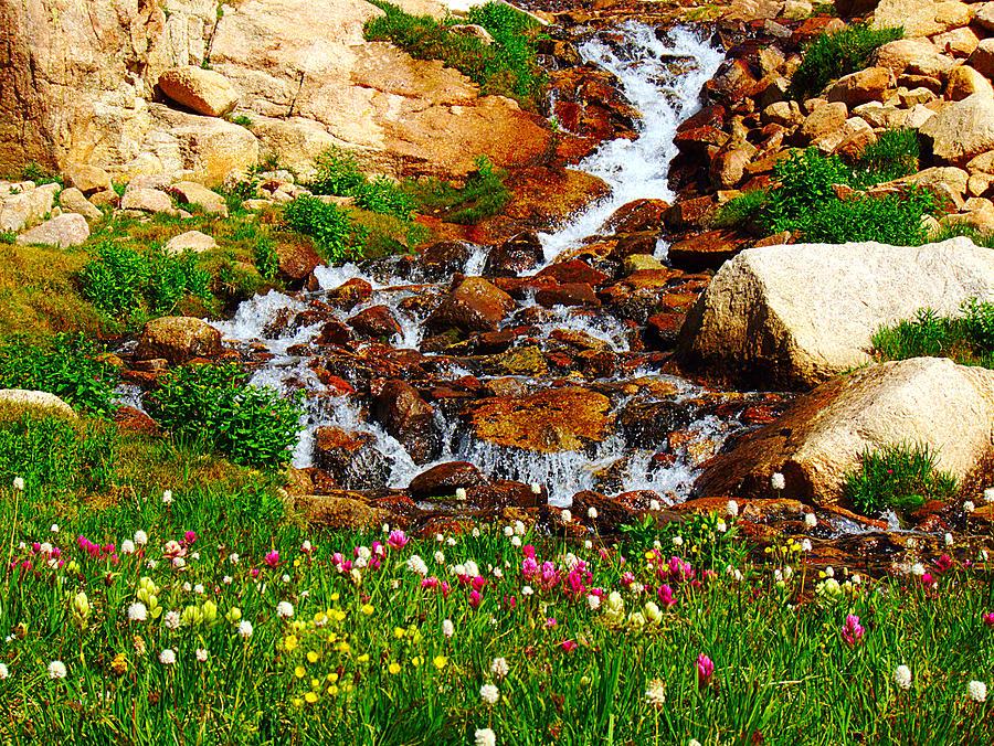 Wildflower Waterfall Photograph