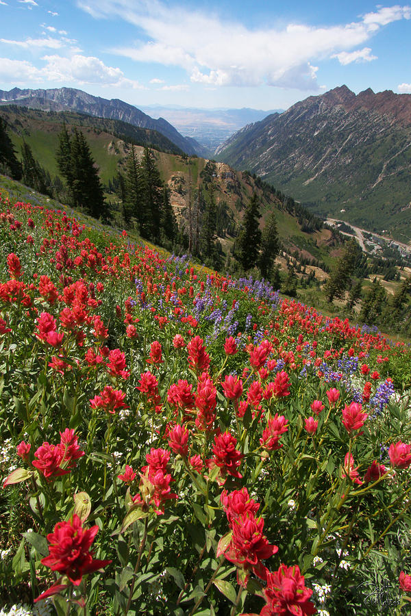 Wildflowers And View Down Canyon Photograph