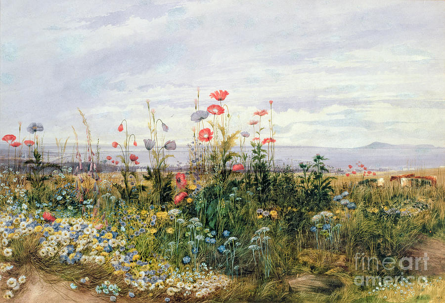Wildflowers With A View Of Dublin Dunleary Painting  - Wildflowers With A View Of Dublin Dunleary Fine Art Print