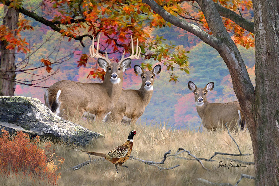 deer art painting artwork print north american wildlife art whitetail deer hunting monster buck october whitetails
