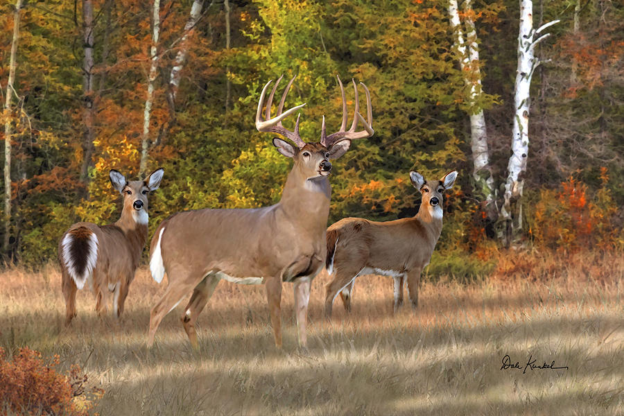 deer art painting artwork print north american wildlife art whitetail deer hunting monster buck record breaker