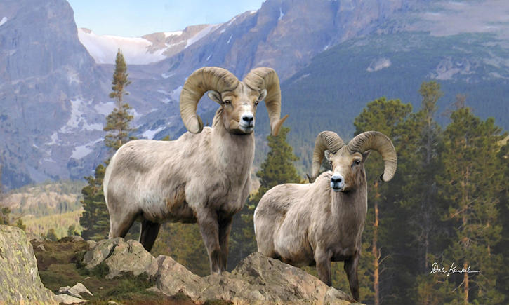 Wildlife Art - Bighorn Sheep by Dale Kunkel Art Fine Art Prints ~  x