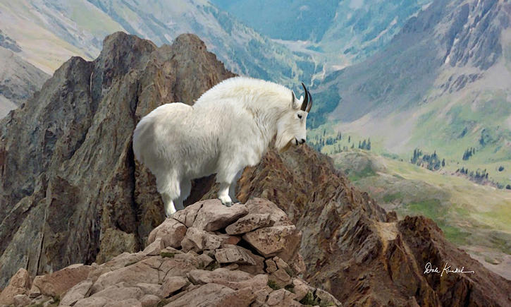 Wildlife Art - Mountain Goat by Dale Kunkel Art Fine Art Prints ~  x