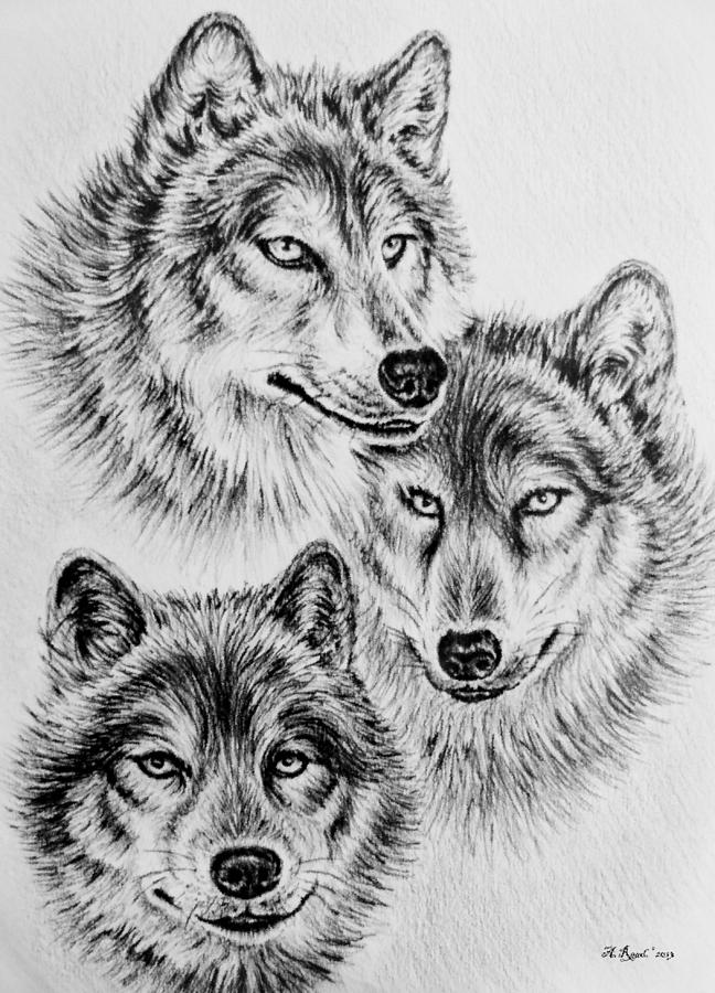 Wildlife Collection-wolves is a drawing by Andrew Read which was ...