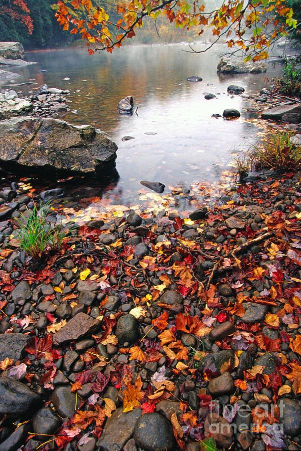 West Virginia Photograph - Williams River Monongahela National Forest by Thomas R Fletcher