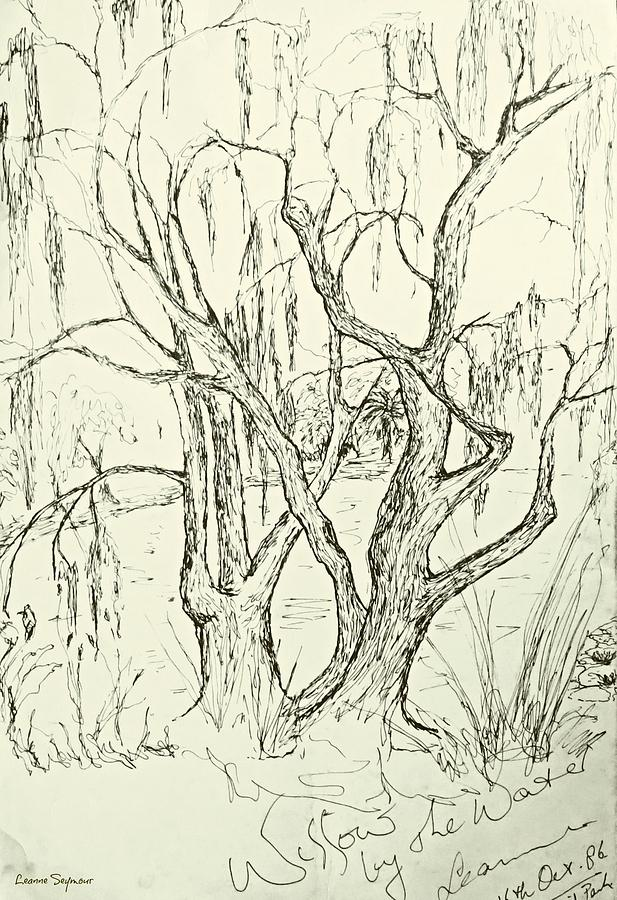 Willows By The Lake Drawing  - Willows By The Lake Fine Art Print
