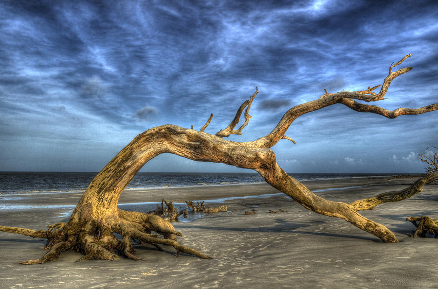 Wind Bent Driftwood Photograph  - Wind Bent Driftwood Fine Art Print