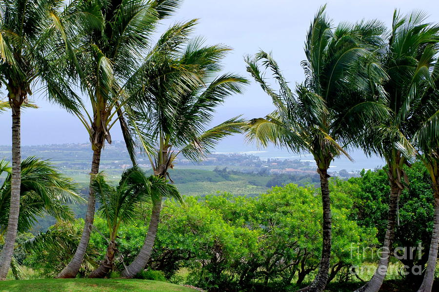 Wind Photograph - Wind Over Kalaheo by Mary Deal