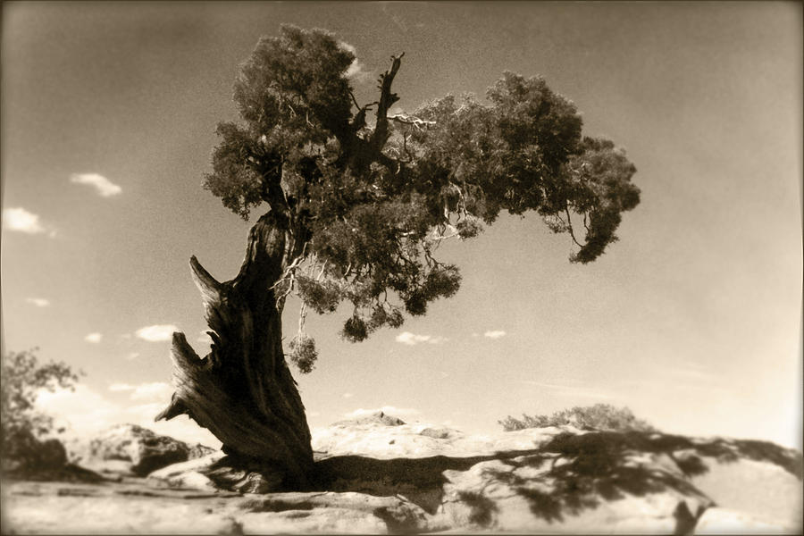 Tree Photograph - Wind Swept Tree by Scott Norris